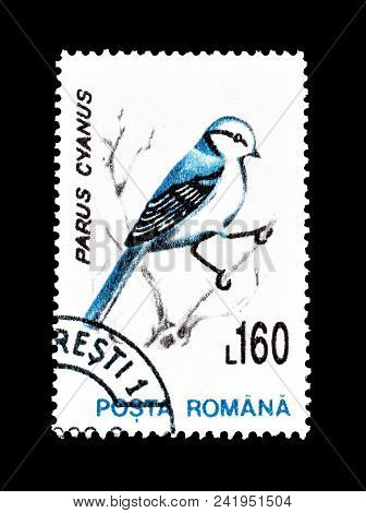 Romania - Circa 1993 : Cancelled Postage Stamp Printed By Romania, That Shows Azure Tit.