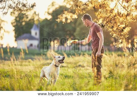 Young Man Throwing Flying Disc For His Dog. Summer Time With Labrador Retriver On Meadow At Sunset.