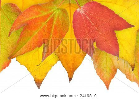 Leaves in Fall.