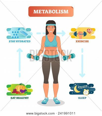 Metabolism concept vector illustration diagram, biochemical body cycle. Eating healthy, drinking water, exercising and sleeping well. Human wellbeing poster. poster