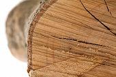 log texture, extreme closeup photo poster