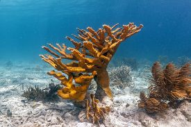 Coral Reef In Carbiiean Sea Off Coast Of Bonaire