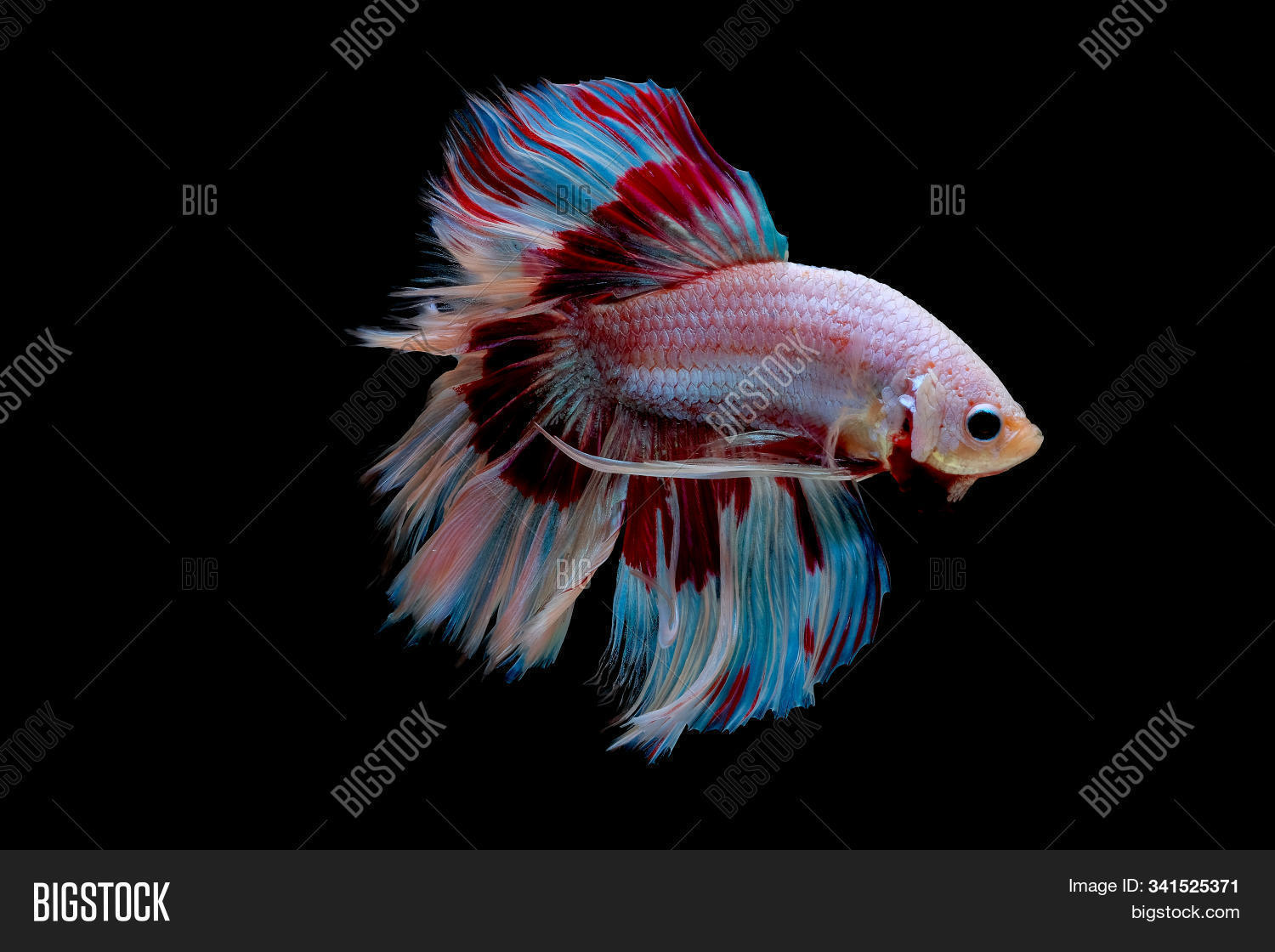 Colorful Main Color Image Photo Free Trial Bigstock
