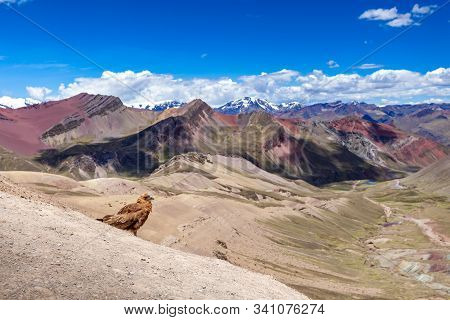 View Of Rainbow Mountains Of Peru. Peruvian Andes. Ausangate Mountain. In The Foreground Sits An Eag