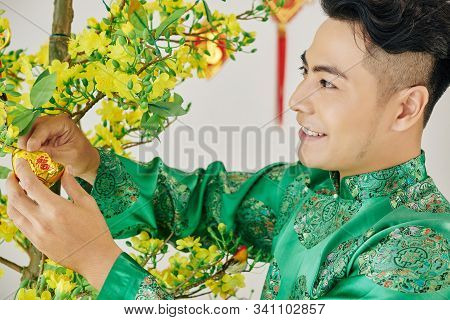 Smiling Handsome Young Asian Man Decorating Blooming Apricot Tree For Tet Celebration
