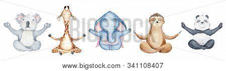 Watercolor Animals Character Collection. Panda Bear, Sloth, Giraffe, Koala, Elephant