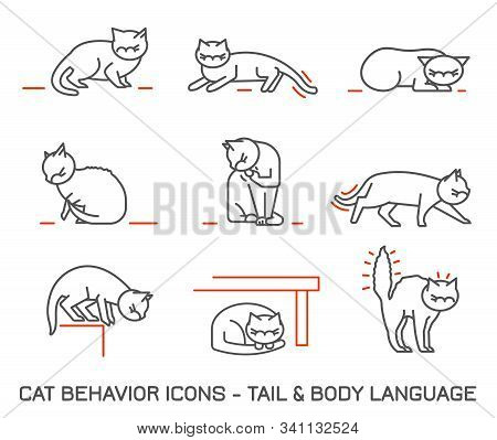 Cat Fearful Behavior Signals Set. Domestic Animal Or Pet Body Language. Fear And Anxiety. I Am Terri