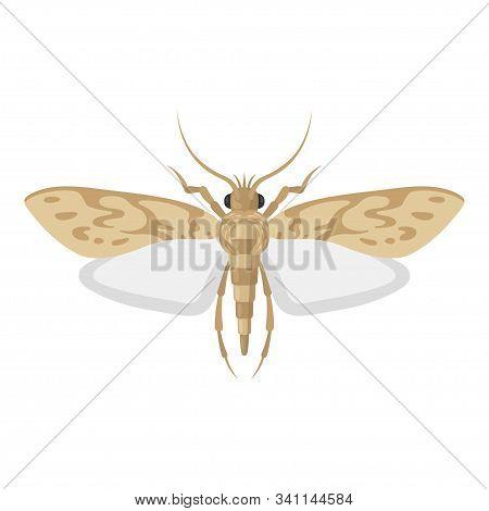 Mole Pest Entomology Icon, Little Harmful Moth
