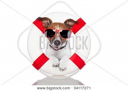 Lifesaver Dog