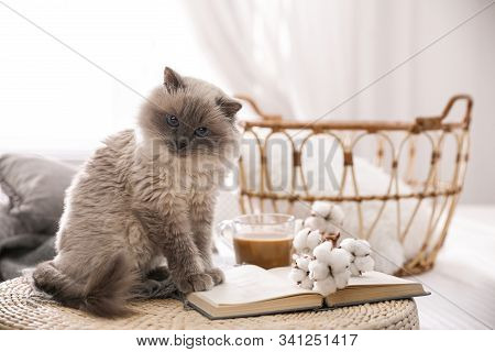 Birman Cat And Book On Wicker Pouf At Home. Cute Pet