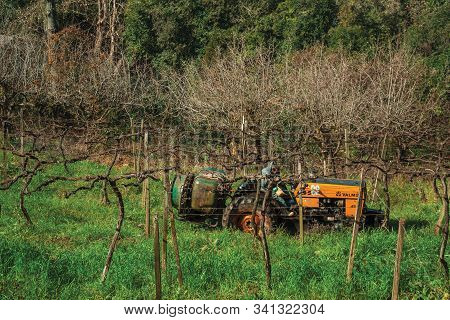 Bento Goncalves, Brazil - July 12, 2019. Landscape With A Farmer On A Tractor Amid Leafless Grapevin