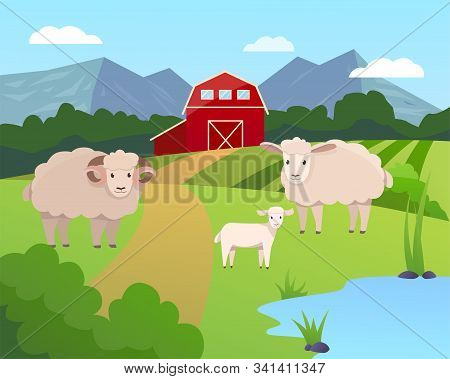 Vector Illustration Of A Farm With Green Field And Blue Lake, Garner And Trees With Sheep Family On