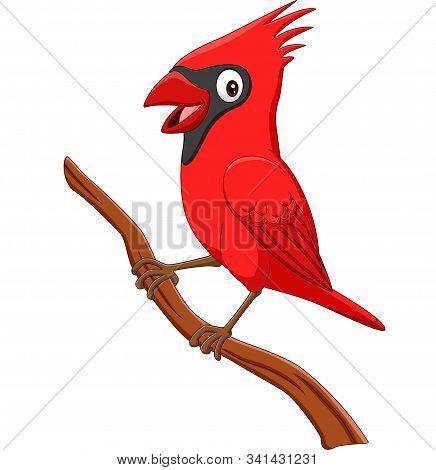 Vector Illustration Of Cartoon Cardinal Bird On Tree Branch