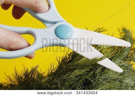 Ceramic Scissors. Eco-friendly Food Slicing. Cooking For Children. Cut Food With Ceramic Scissors. K