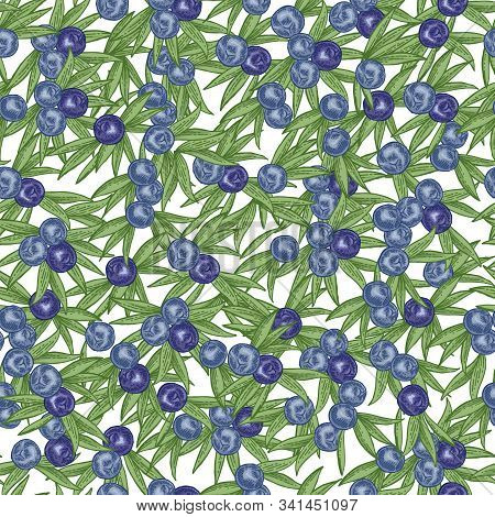 Juniper Berries Seamless Pattern. Colorful Berries Ans Leaves Of Juniper Isolated On White Backgroun