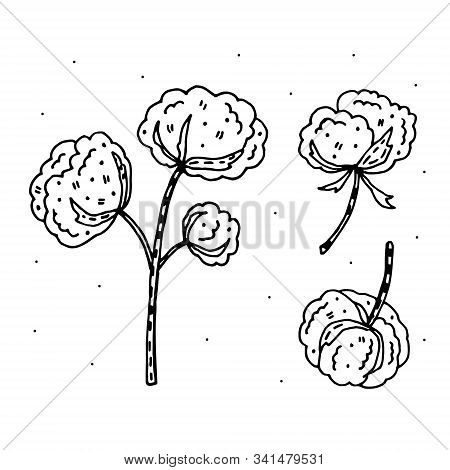 Cotton Flower Doodle Vector Clipart. Herbs. Organic Ingredients. Eco Friendly, Vegan.  Sticker, Icon