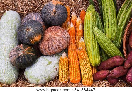 Group Of Vegetables And Fruits From Organic Farm, Corn Cob, Pumpkin, Winter Melon, Sweet Potato And