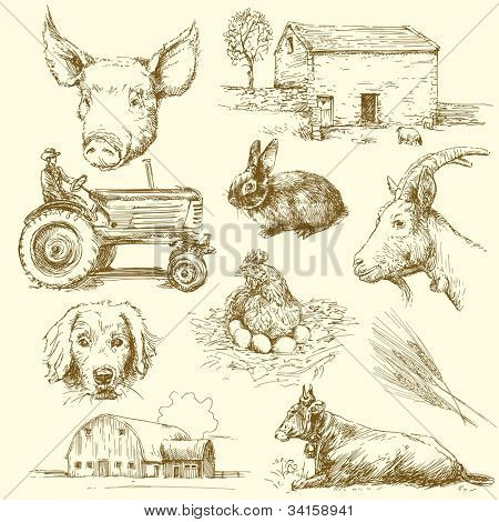 farm animals - hand drawn collection