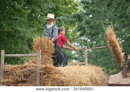 Amish Putting Wheat Into The Threshing Machine