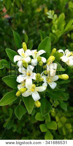 Flores Brancas, Campo, Fazenda, Natureza, Paisagem, Foto, Instagram