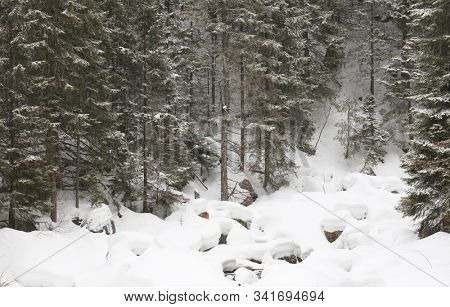 Winter landscape, snowy winter trees. Winter snowy day scene. Monochromatic winter background, panoramic forest view