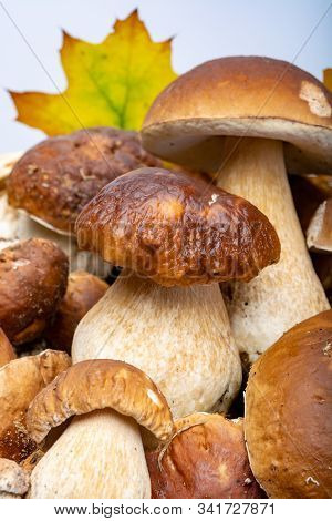 Fresh Raw Edible Forest Mushrooms Boletus Edulis Or Porcini Fungus, Tasty Vegetarian Food