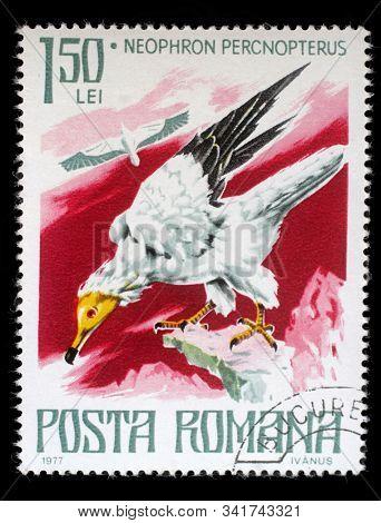 ROMANIA - CIRCA 1977: A stamp printed by Romania, show Egyptian vulture, circa 1977.