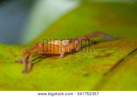Orange Spider On Green Leaf In Forest