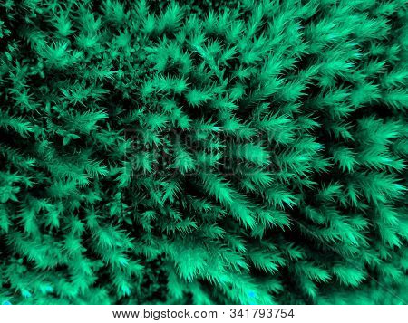 Aqua Menthe Moss Natural Background Pattern Color Of Year 2020. Texture Of Moss In Aqua Menthe Color