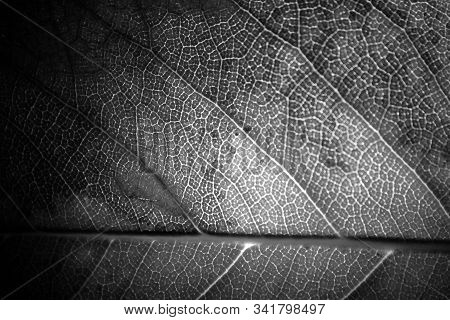 Close Up Of A Black And White Leaf