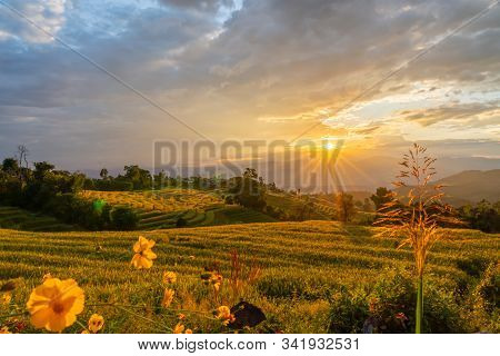 Beautiful Rice Terraces During Sunset In Pa Bong Piang, The Rural Village In Chiangmai, Thailand