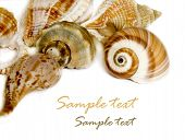 Seashell on white with a lot of copy space poster