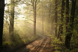Spring forest path road foggy dawn sunrise sunset sun morning Nature background magic Nature background woods trees Nature background Nature background mist fog Nature background misty sunlight light Nature background rays sunbeams Nature background.