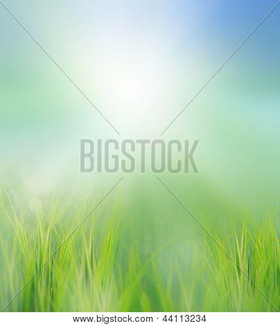Green Field In Morning Light