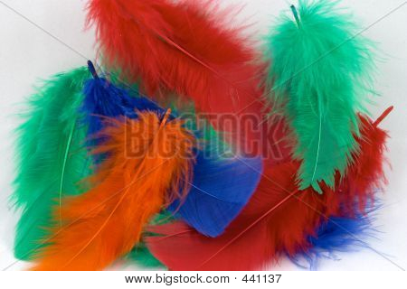 Dyed Feathers