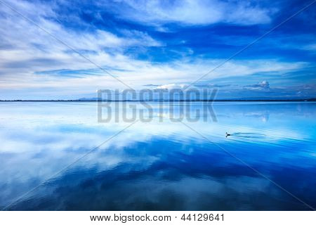 Sunset Blue Landscape. Little Grebe Diving Bird In A Lagoon. Orbetello Lagoon, Argentario, Italy.