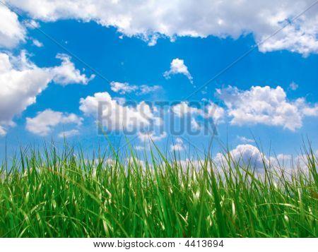 Green Lawn Under Blue Sky