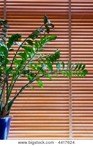 Plant In Front Of Blinds