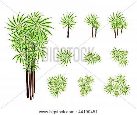 Een Set van isometrische Yucca boom of Dracaena Plant