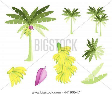 Set Of Banana Tree With Bananas And Blossom