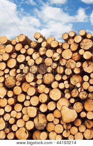 Pile Of Freshly Cut Lumber