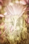 Beautiful pink daisy flowers, fresh floral background, wildflowers glade, spring season, soft focus poster