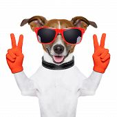 peace and victory fingers dog with red gloves and glasses poster