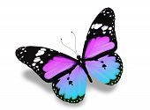 Blue violet butterfly flying isolated on white background poster