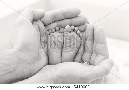 feet newborn baby in father's hands ( black and white ) poster