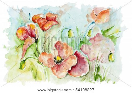 Poppies Meadow