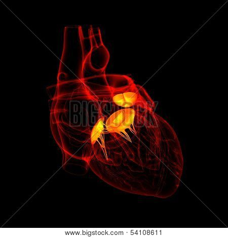 3d render Heart valve - front view