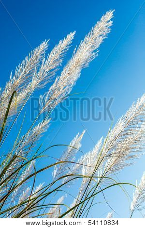 Flower Of Wild Grass In The Morning