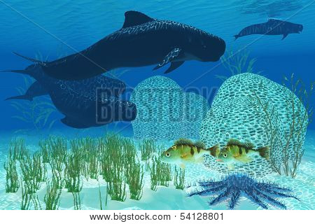 Two Rockfish watch warily as a pod of Pilot whales swim past a coral reef and a Crown of Thorns starfish. poster