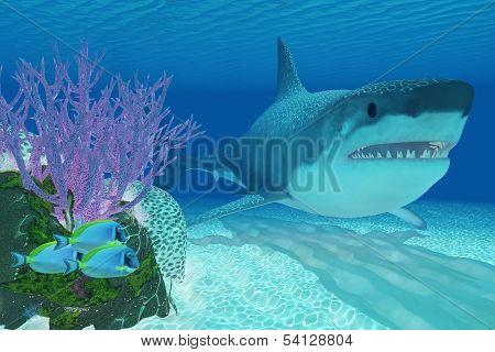 Prehistoric Megalodon Shark